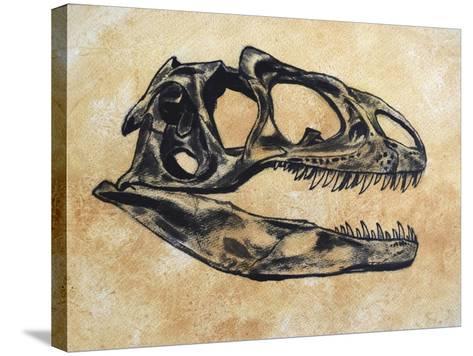 Allosaurus Dinosaur Skull-Stocktrek Images-Stretched Canvas Print