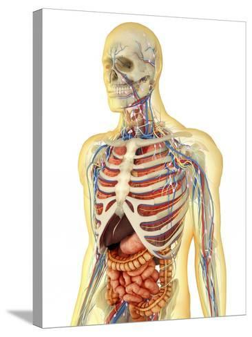 Human Body with Internal Organs, Nervous System, Lymphatic System and Circulatory System-Stocktrek Images-Stretched Canvas Print