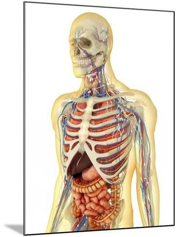 Human Body with Internal Organs, Nervous System, Lymphatic System and Circulatory System-Stocktrek Images-Mounted Art Print