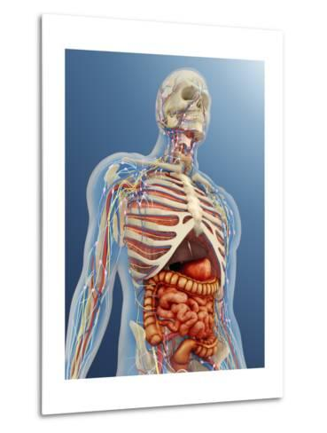 Human Body with Internal Organs, Nervous System, Lymphatic System and Circulatory System-Stocktrek Images-Metal Print
