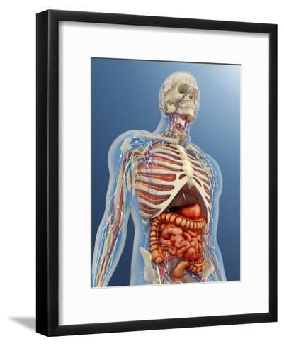 Human Body with Internal Organs, Nervous System, Lymphatic System and Circulatory System-Stocktrek Images-Framed Art Print