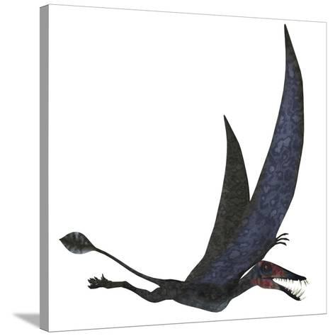 Dorygnathus Pterosaur from the Jurassic Period-Stocktrek Images-Stretched Canvas Print