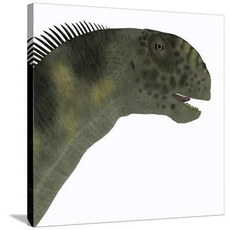 Camarasaurus Dinosaur Head-Stocktrek Images-Stretched Canvas Print