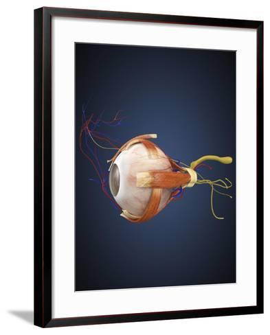 Human Eye with Muscles and Circulatory System-Stocktrek Images-Framed Art Print