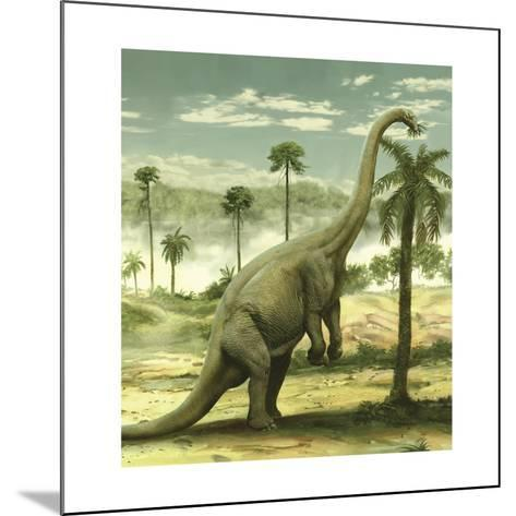 Apatosaurus Feeding on the Leaves of a Tree-Stocktrek Images-Mounted Art Print