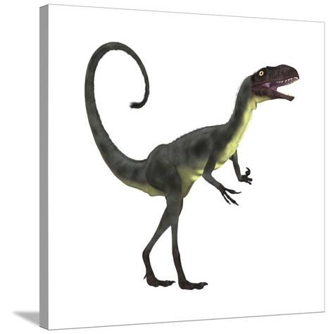 Dilong Dinosaur-Stocktrek Images-Stretched Canvas Print