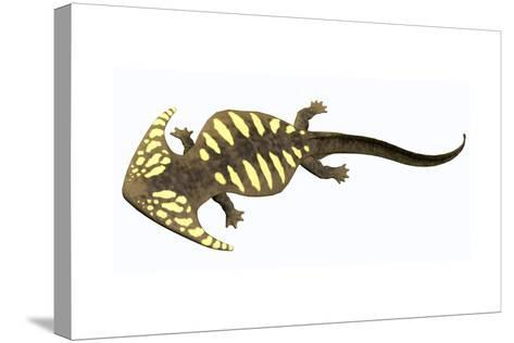 Diplocaulus Amphibian from the Prehistoric Era-Stocktrek Images-Stretched Canvas Print