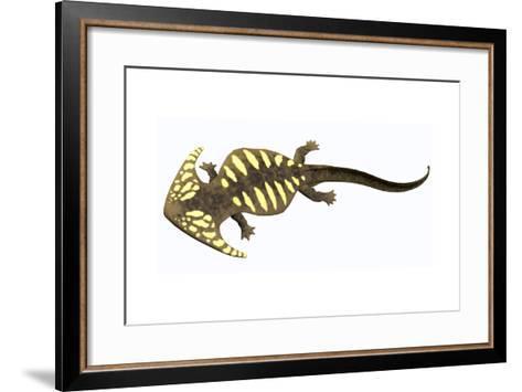 Diplocaulus Amphibian from the Prehistoric Era-Stocktrek Images-Framed Art Print