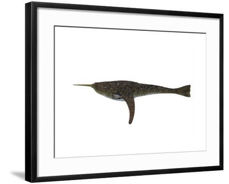 Doryaspis Jawless Fish from the Devonian Period-Stocktrek Images-Framed Art Print