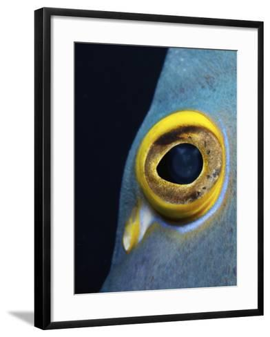 Close-Up View of a French Angelfish Eye-Stocktrek Images-Framed Art Print