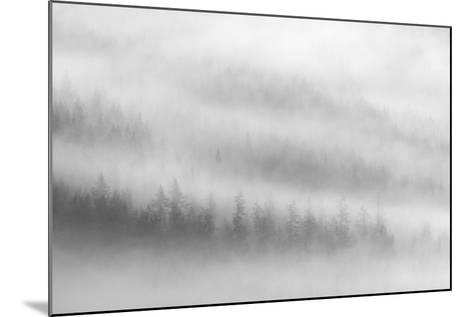 Fog-Ursula Abresch-Mounted Photographic Print