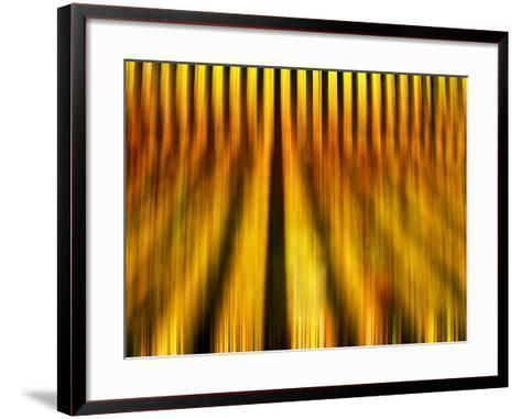 Golden Shadows-Adrian Campfield-Framed Art Print