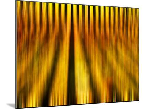 Golden Shadows-Adrian Campfield-Mounted Photographic Print