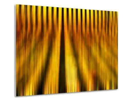 Golden Shadows-Adrian Campfield-Metal Print