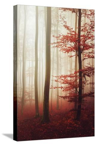 The Way Out-Philippe Sainte-Laudy-Stretched Canvas Print