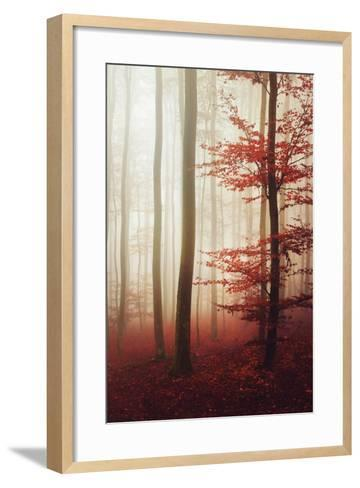 The Way Out-Philippe Sainte-Laudy-Framed Art Print