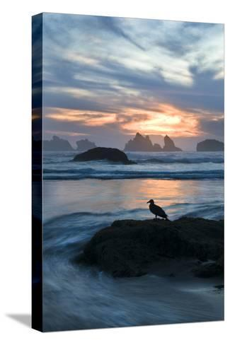 USA, Oregon, Bandon Beach. Seagull on Rock at Twilight-Jaynes Gallery-Stretched Canvas Print