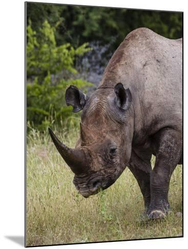 Africa, Namibia, Etosha National Park. Head and Shoulders of Rhinoceros-Jaynes Gallery-Mounted Photographic Print