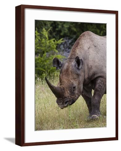 Africa, Namibia, Etosha National Park. Head and Shoulders of Rhinoceros-Jaynes Gallery-Framed Art Print