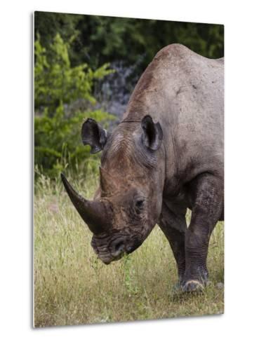 Africa, Namibia, Etosha National Park. Head and Shoulders of Rhinoceros-Jaynes Gallery-Metal Print