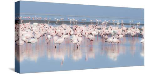 Africa, Namibia, Walvis Bay. Group of Greater Flamingos-Jaynes Gallery-Stretched Canvas Print