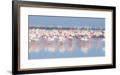 Africa, Namibia, Walvis Bay. Group of Greater Flamingos-Jaynes Gallery-Framed Art Print