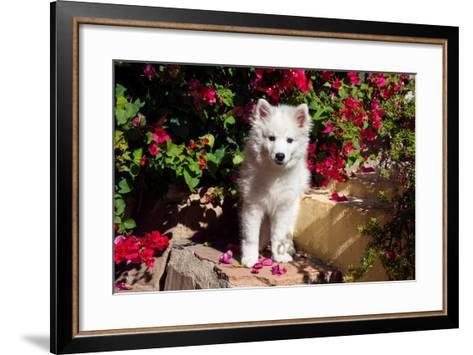 American Eskimo Puppy Sitting on Garden Stairs-Zandria Muench Beraldo-Framed Art Print