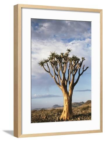 Namibia, Damaraland, View of Alone Aloe Dichotoma, Quiver Tree-Rick Daley-Framed Art Print
