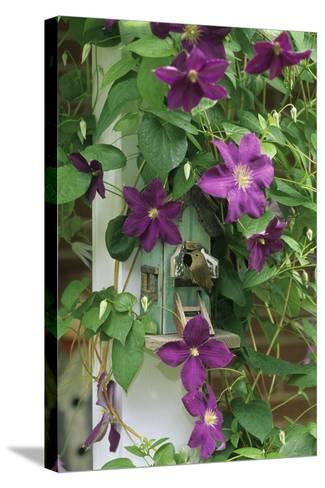 USA, Pennsylvania. Wren in Birdhouse and Clematis Vine-Jaynes Gallery-Stretched Canvas Print
