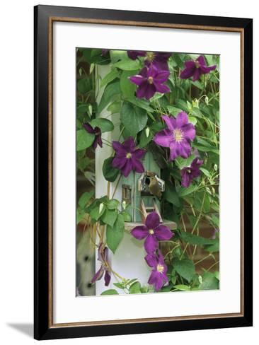 USA, Pennsylvania. Wren in Birdhouse and Clematis Vine-Jaynes Gallery-Framed Art Print