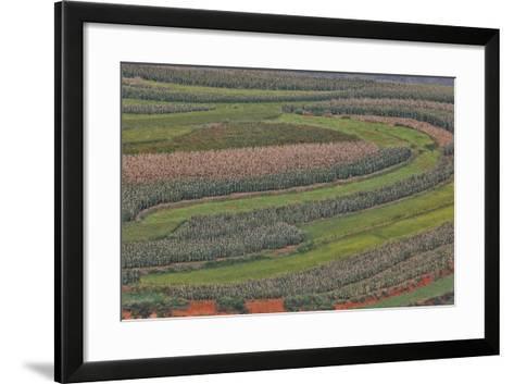 Canola and Corn Crop,Kunming Dongchuan Red Land, China-Darrell Gulin-Framed Art Print