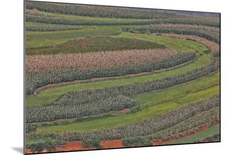 Canola and Corn Crop,Kunming Dongchuan Red Land, China-Darrell Gulin-Mounted Photographic Print