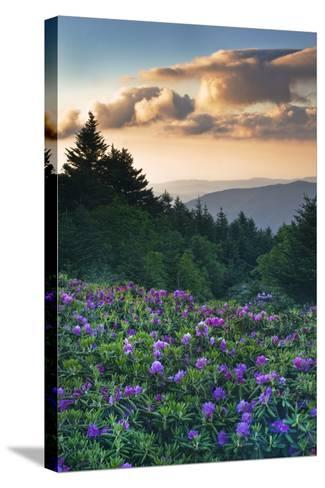 USA, North Carolina. Catawba Rhododendrons in Mountains-Jaynes Gallery-Stretched Canvas Print