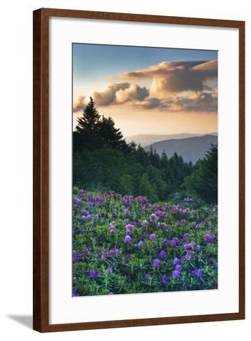 USA, North Carolina. Catawba Rhododendrons in Mountains-Jaynes Gallery-Framed Art Print