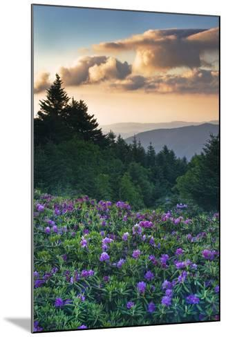 USA, North Carolina. Catawba Rhododendrons in Mountains-Jaynes Gallery-Mounted Photographic Print