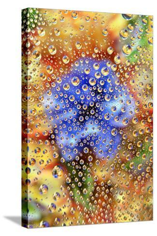 USA, Colorado, Lafayette. Water Bubbles on Glass Table Top-Jaynes Gallery-Stretched Canvas Print