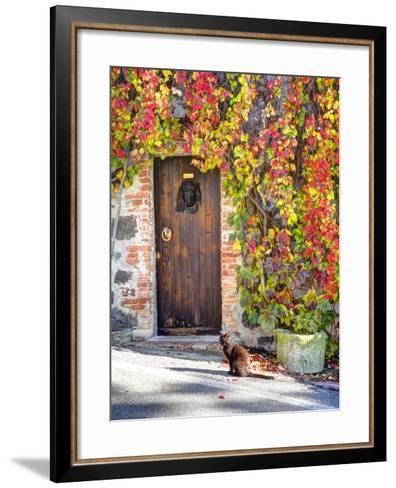 Italy, Tuscany, Contignano. a Wooden Door Surrounded by Fall and Cat-Julie Eggers-Framed Art Print