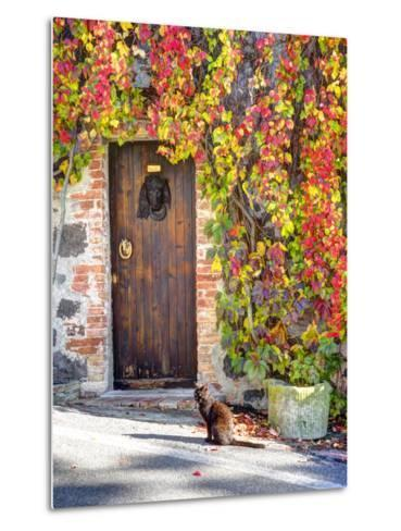 Italy, Tuscany, Contignano. a Wooden Door Surrounded by Fall and Cat-Julie Eggers-Metal Print
