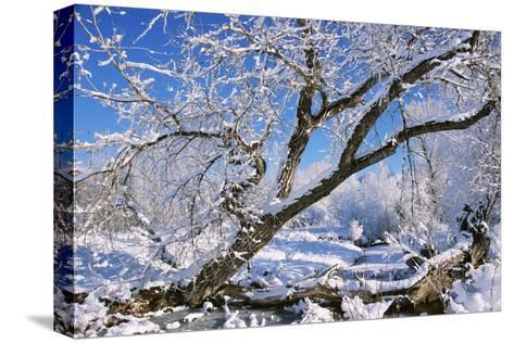 USA, Colorado, Boulder. Winter Scenic-Jaynes Gallery-Stretched Canvas Print