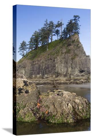 Washington, Olympic National Park, Second Beach, Ochre Sea Stars and Seastack-Jamie And Judy Wild-Stretched Canvas Print
