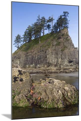 Washington, Olympic National Park, Second Beach, Ochre Sea Stars and Seastack-Jamie And Judy Wild-Mounted Photographic Print
