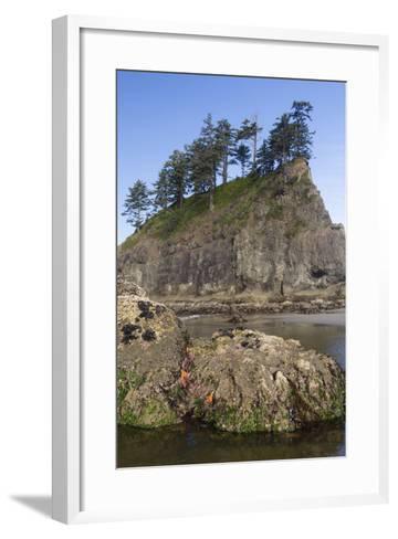 Washington, Olympic National Park, Second Beach, Ochre Sea Stars and Seastack-Jamie And Judy Wild-Framed Art Print
