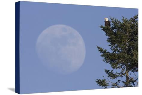 Bald Eagle, Rising Full Moon-Ken Archer-Stretched Canvas Print