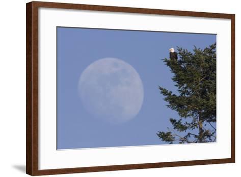 Bald Eagle, Rising Full Moon-Ken Archer-Framed Art Print
