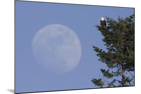 Bald Eagle, Rising Full Moon-Ken Archer-Mounted Photographic Print