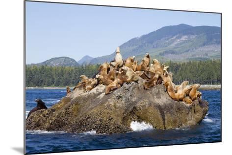 Canada, Pacific Rim National Park Reserve, West Coast Trail, Steller Sea Lions-Jamie And Judy Wild-Mounted Photographic Print