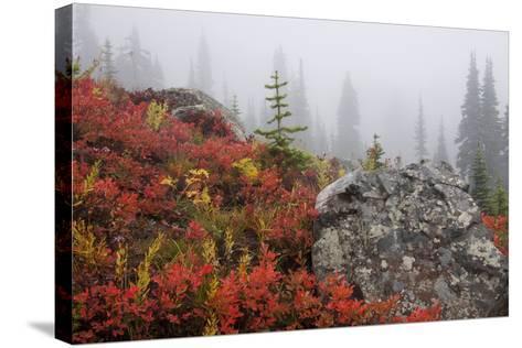 Mount Rainier National Park, Autumn Fog-Ken Archer-Stretched Canvas Print