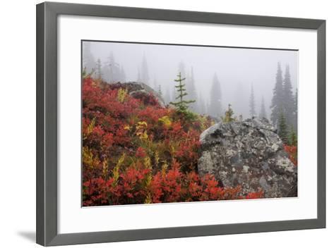Mount Rainier National Park, Autumn Fog-Ken Archer-Framed Art Print