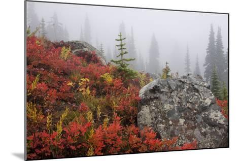 Mount Rainier National Park, Autumn Fog-Ken Archer-Mounted Photographic Print