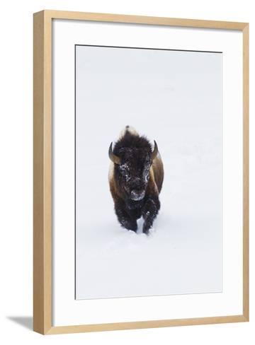 Bison Bull-Ken Archer-Framed Art Print